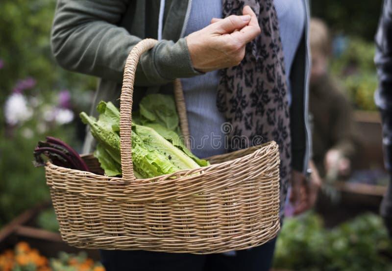 Donna senior che porta un canestro con le verdure fotografia stock