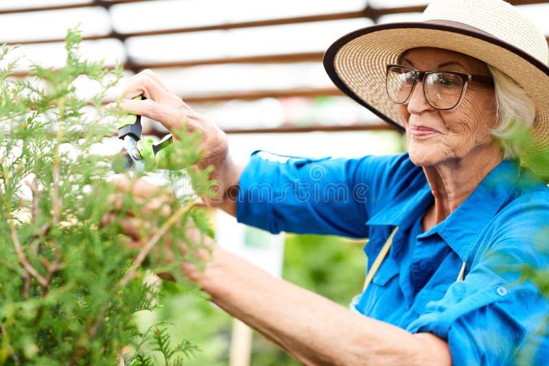 Donna senior sorridente che si preoccupa per le piante immagini stock