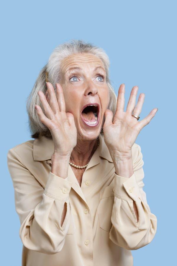 Donna senior spaventata che grida contro il fondo blu immagini stock libere da diritti
