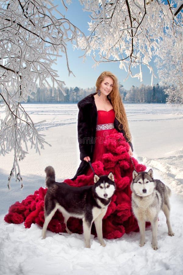 Donna sul vestito rosso con i cani Husky o Malamute della ragazza di fiaba Natale fotografie stock