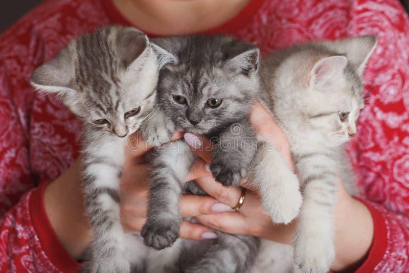 Donna in un rivestimento rosso che tiene piccolo gattino grigio simile a pelliccia tre immagini stock