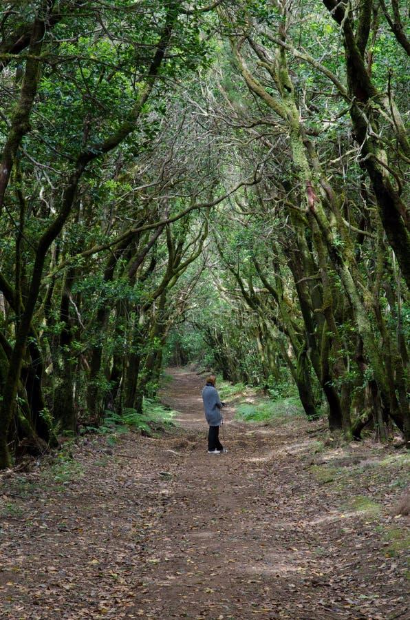 Donna in una foresta dell'alloro fotografia stock