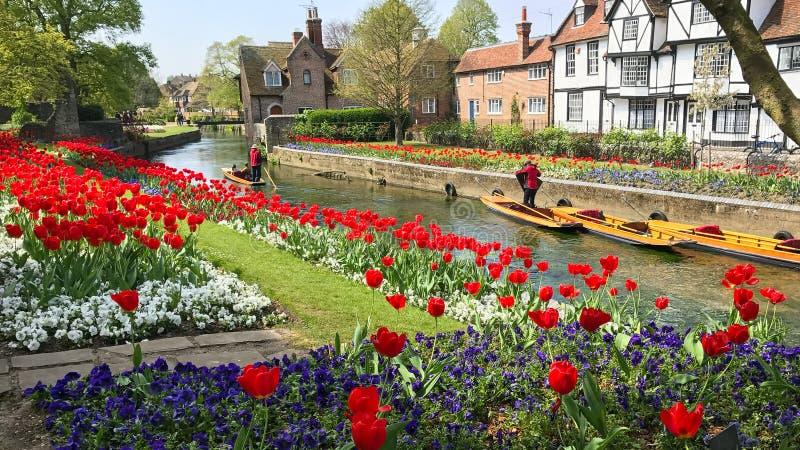 Donnant un coup de volée sur la rivière Stour à Cantorbéry, Kent images stock