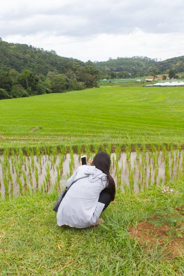 Donne asiatiche al giacimento a terrazze verde del riso, Mae Klang Luang Chiang Mai Tailandia fotografia stock
