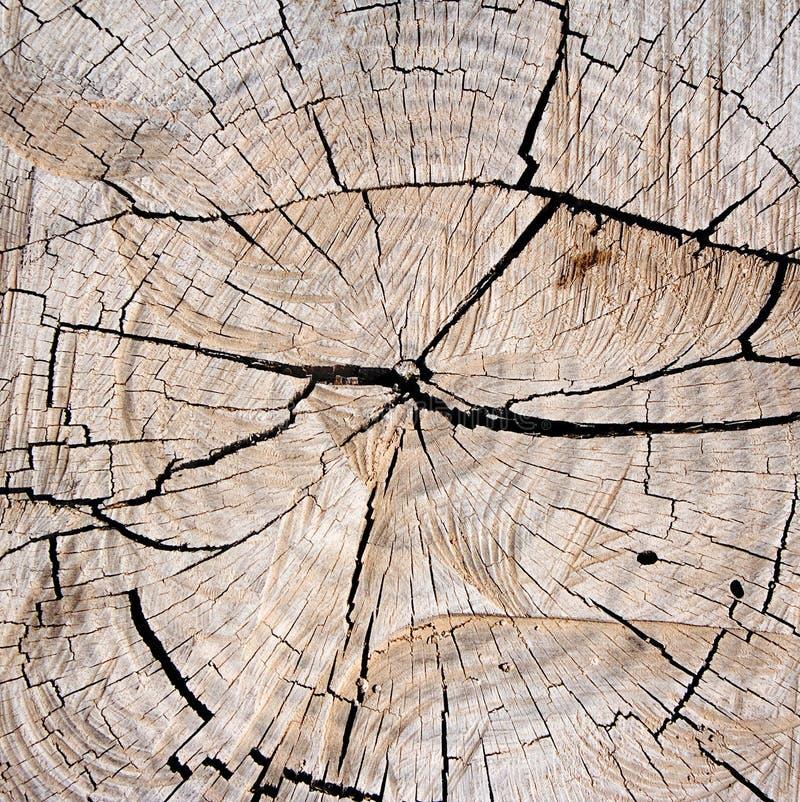 Donne au tronçon une consistance rugueuse d'arbre d'â image libre de droits