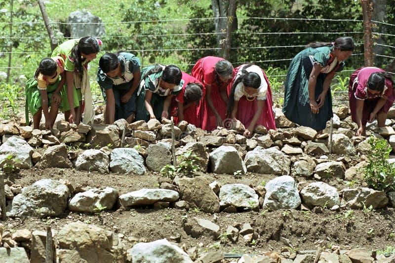 Donne indiane che costruiscono i terrazzi nell'orto fotografia stock libera da diritti