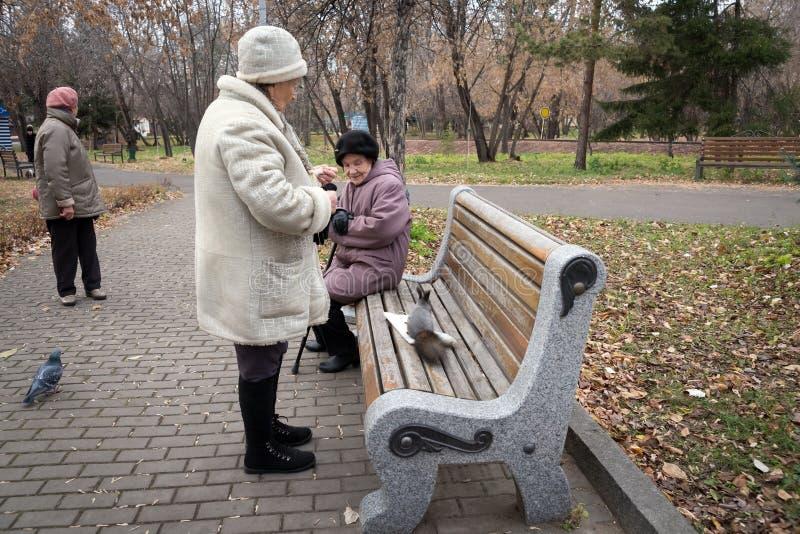 Donne più anziane camminare ed alimentare lo scoiattolo ed i piccioni vicino al banco, nel parco in autunno fotografia stock libera da diritti