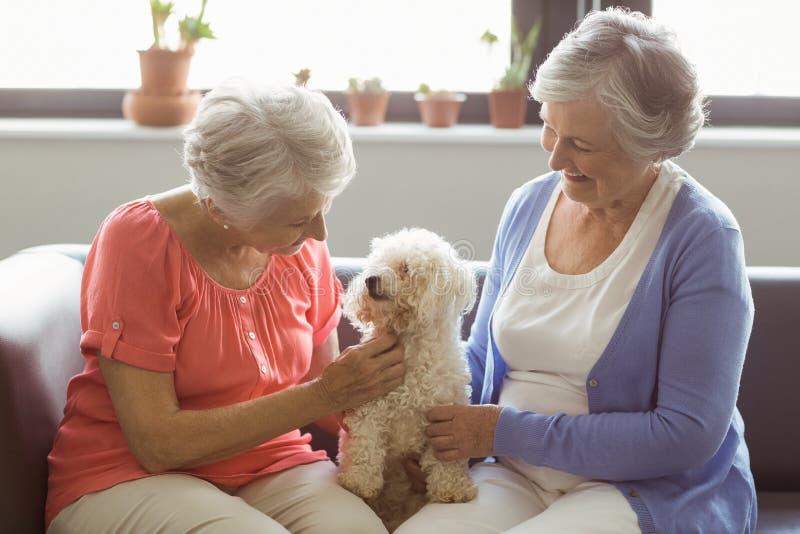 Donne senior che segnano un cane immagine stock libera da diritti