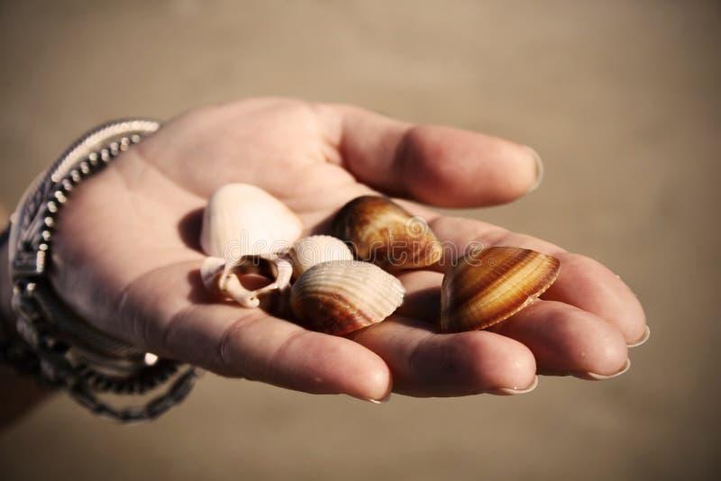 Donner des seashells photographie stock libre de droits