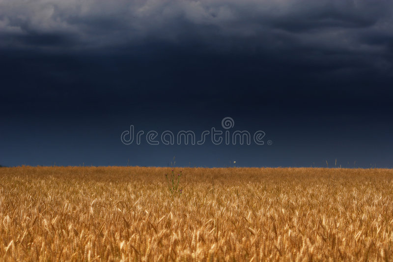 Donnern Sie Himmel über Feld lizenzfreie stockfotografie
