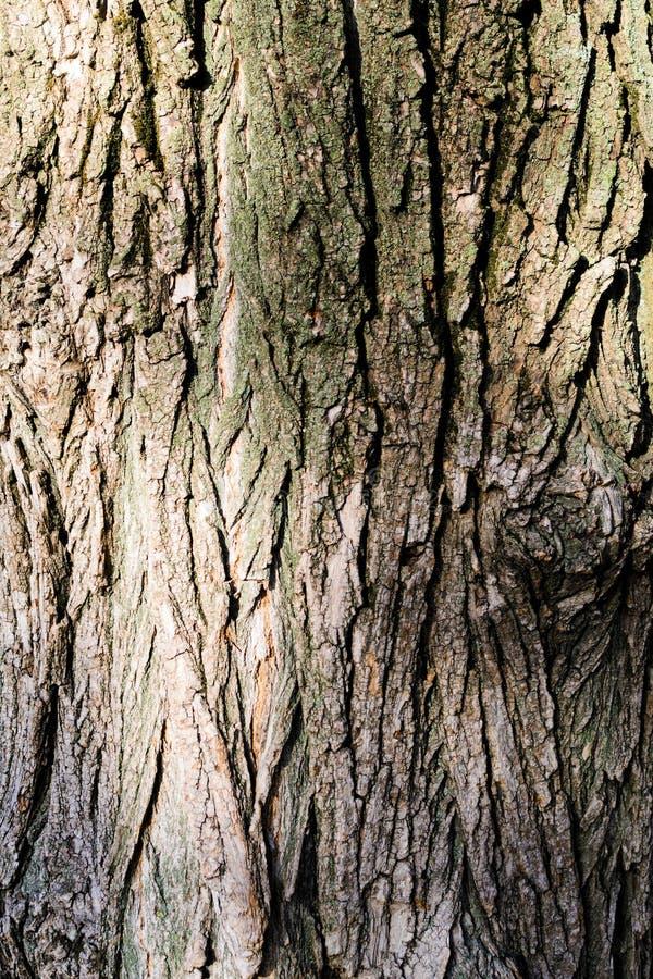 Donnez à la vieille écorce une consistance rugueuse d'arbre en bois photographie stock
