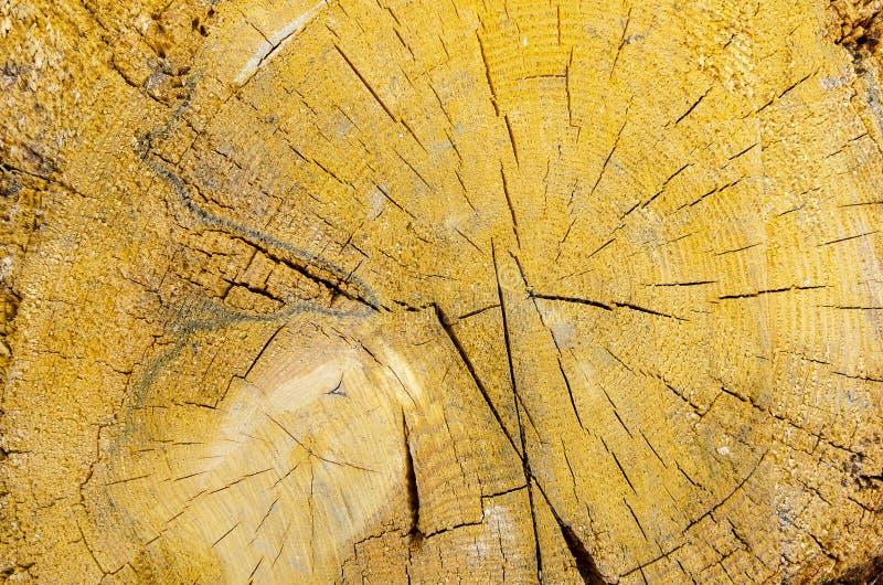 Donnez au grand bois une consistance rugueuse circulaire jaune photographie stock