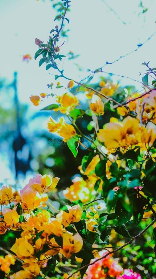 Donnez mes fleurs arrières photographie stock
