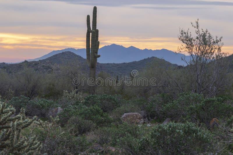 Donoran-Wüste mit Saguaro lizenzfreies stockfoto