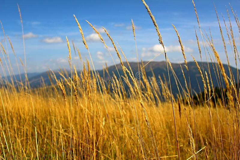 Donovaly, Словакия, трава стоковые фотографии rf