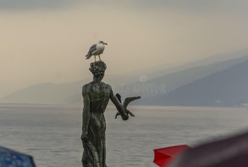 Donzela com a gaivota foto de stock