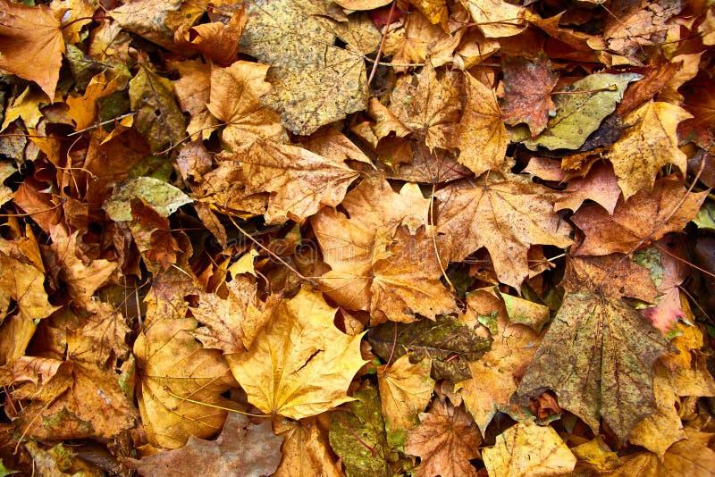 Dood bladeren geschoten ideaal voor achtergronden stock afbeeldingen
