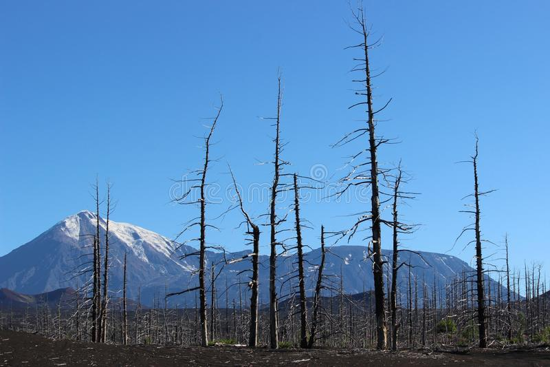 Dood Bos, Tolbachik-vulkaan royalty-vrije stock afbeelding