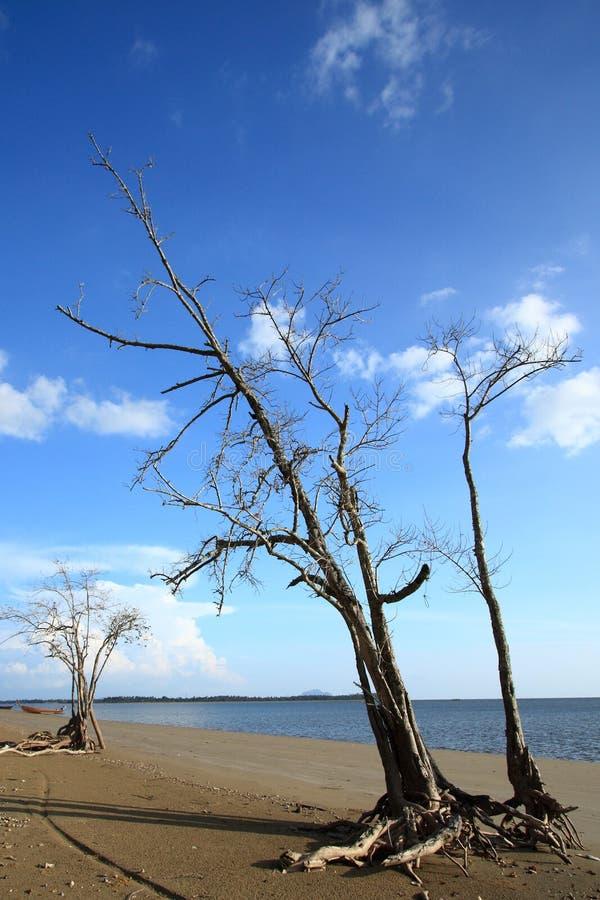 Dood hout op strand stock fotografie