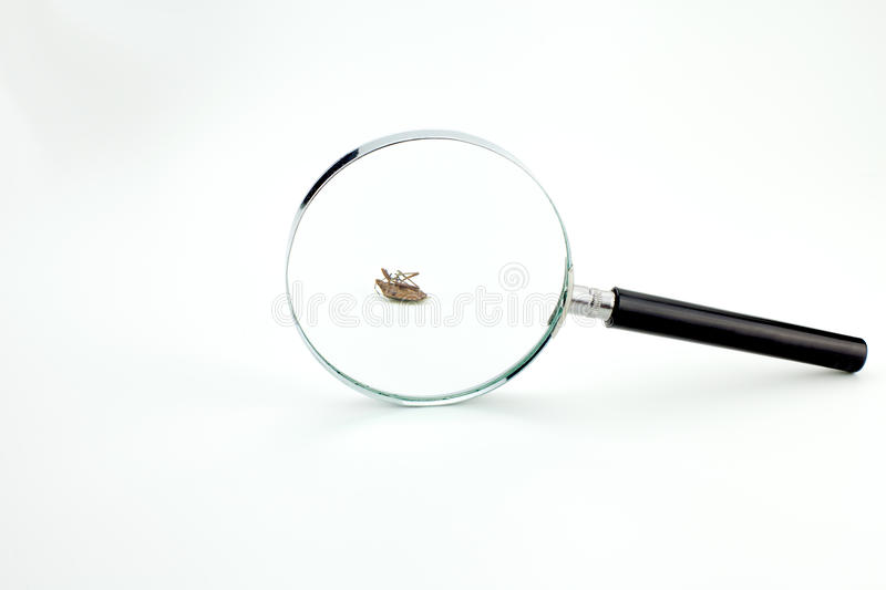 Dood Insect royalty-vrije stock foto