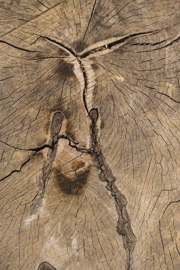 Dood van een oude boom De textuur van de boom in de stomp stock foto