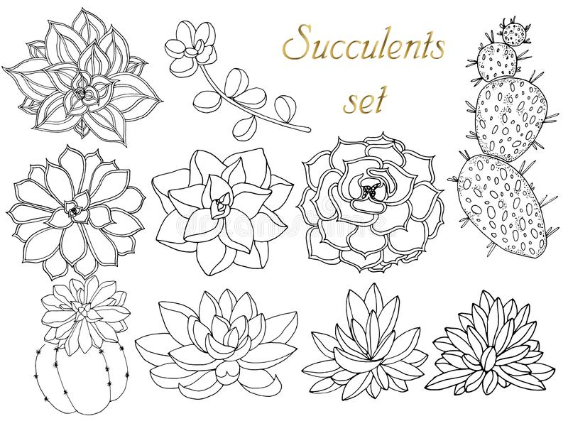 Doodle Floral Background In Vector With Doodles Black And