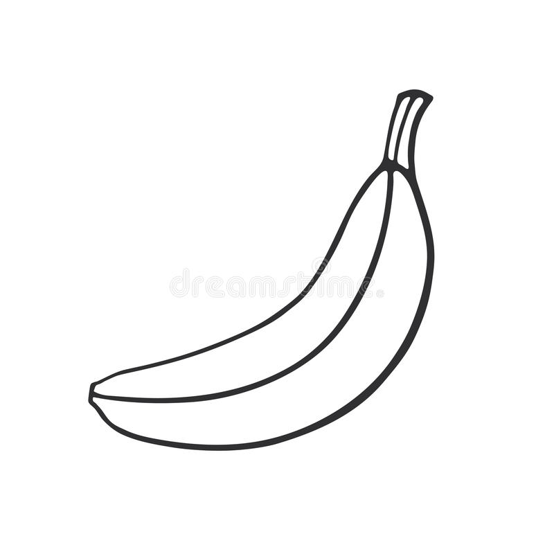 Doodle not peeled banana. Vector illustration. Hand drawn doodle of not peeled banana. Healthy vegetarian food. Cartoon sketch. Decoration for greeting cards royalty free illustration