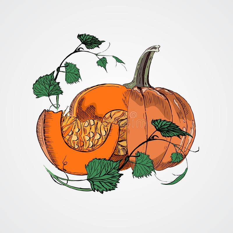 Doodle pumpkins.Vector paint hand drawn picture in cartoon style. vector illustration