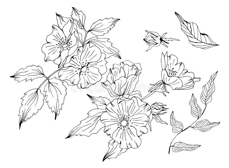 Doodle ręka rysujący kwiecisty nakreślenie ilustracji