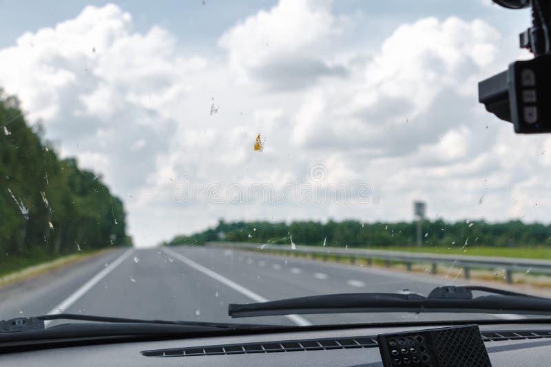 Doodsinsecten op het windscherm van de auto Afgevlakte kevers op de oppervlakte van het glas royalty-vrije stock afbeeldingen