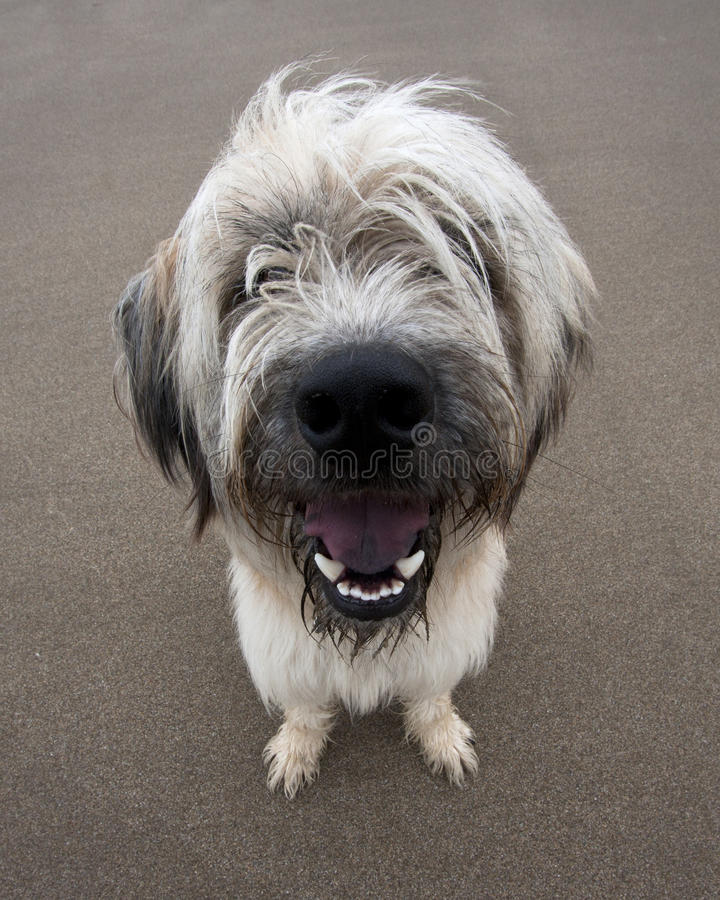 Doof Hund lizenzfreie stockfotografie