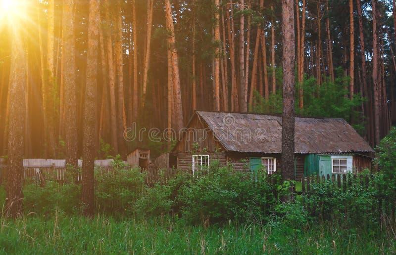 Doof struikgewas van het bos met een blokhuis tegen de achtergrond van eeuw-oude sparren en de stralen van de heldere lente s stock afbeelding