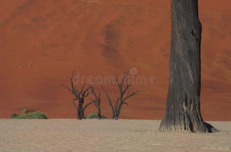 dooie vlei 2 Namibia obrazy stock