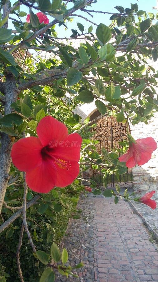 A door in the Alcazaba royalty free stock photos