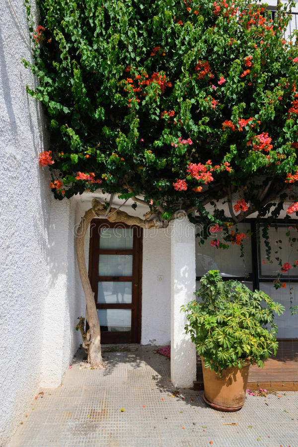 Door and blooming tree. Vintage door and blooming apple tree in Altea stock photos