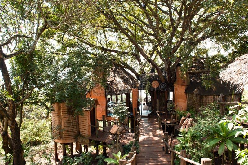 Door bomen naar Ngorongoro Crater Lodge, Tanzania, Afrika Ecologisch concept stock fotografie