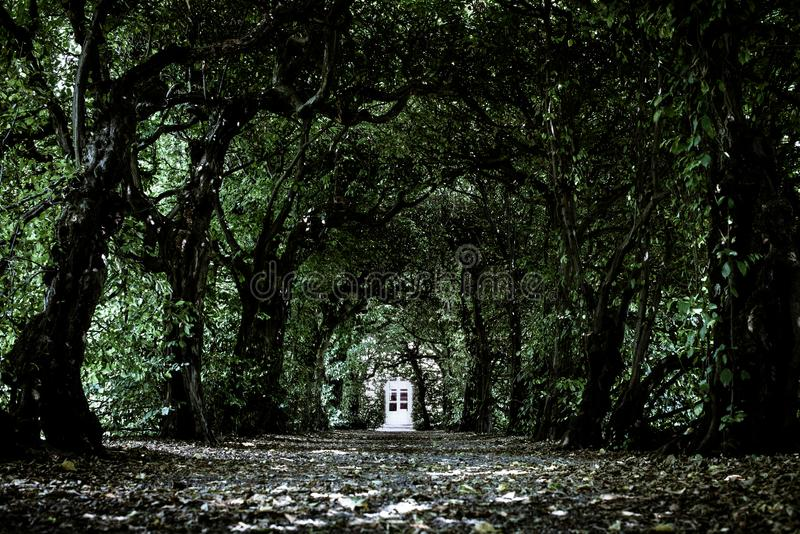 Enchanted door in a tunnel of trees dark magical ambient and scene & Door In A Dark Tunnel Of Trees Stock Photo - Image of mysterious ...