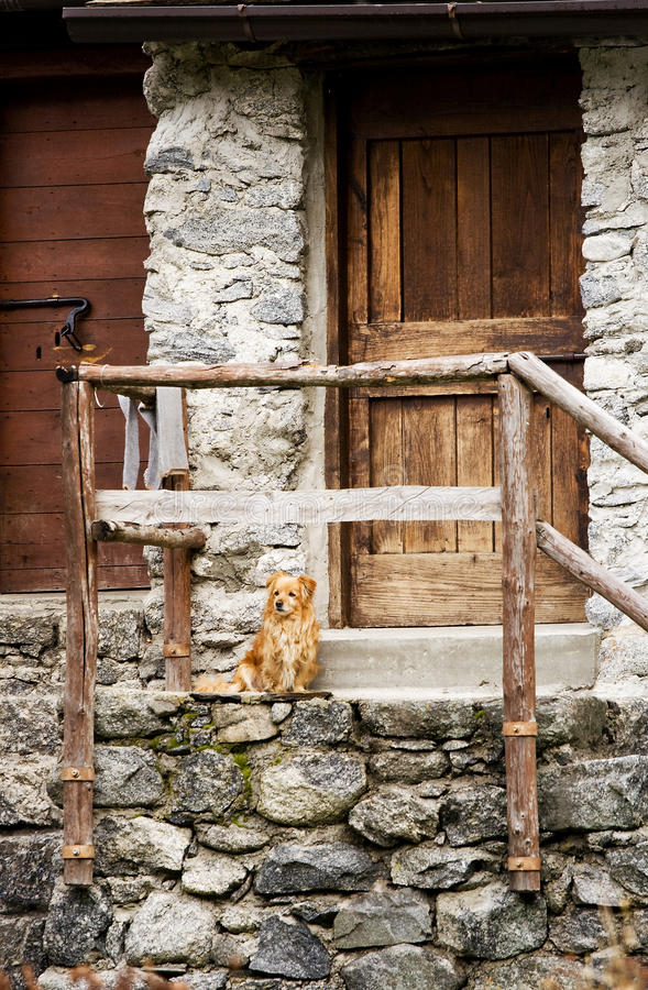 Door and dog. Dog at the door of an old house stock photos