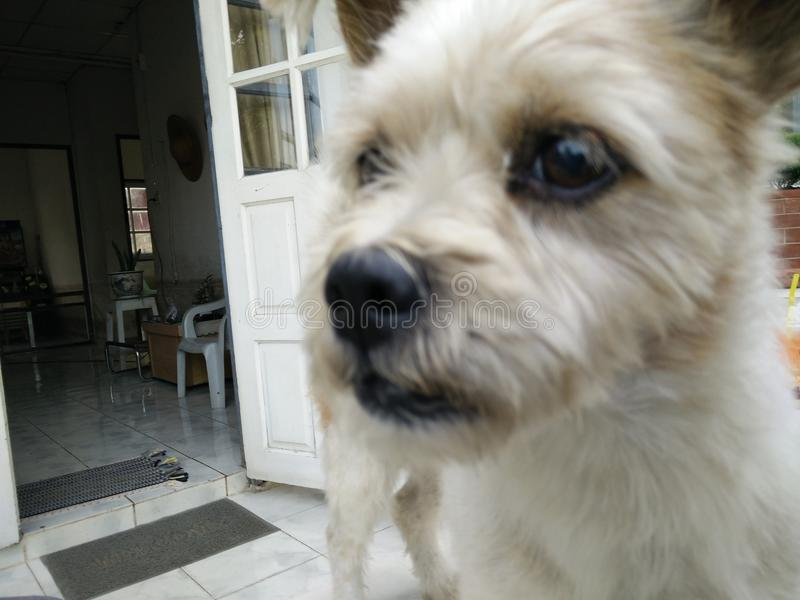 Door dog royalty free stock photo