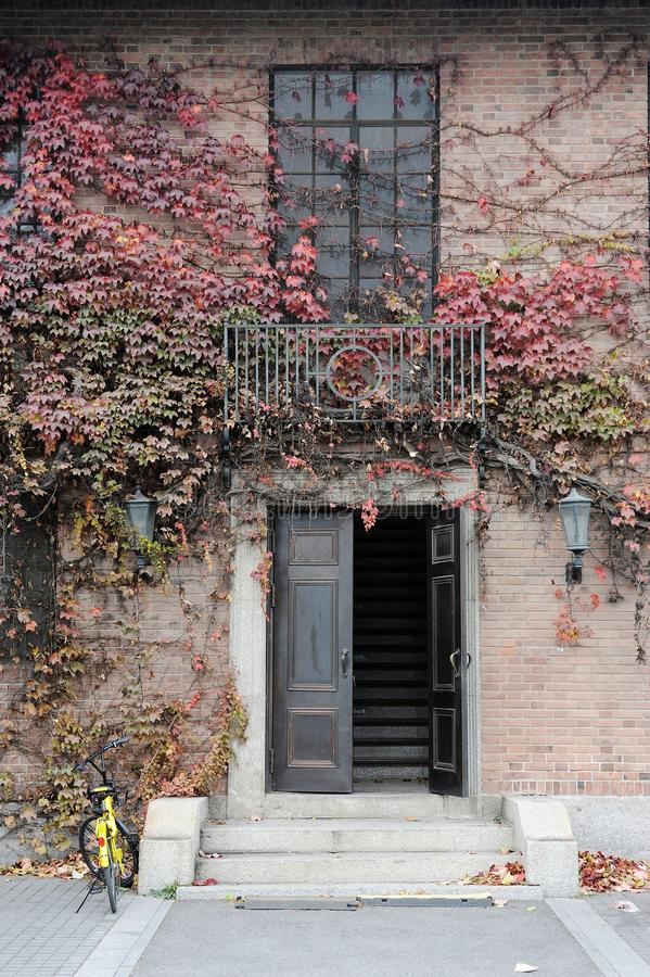 Door with Fall ivy stock photo