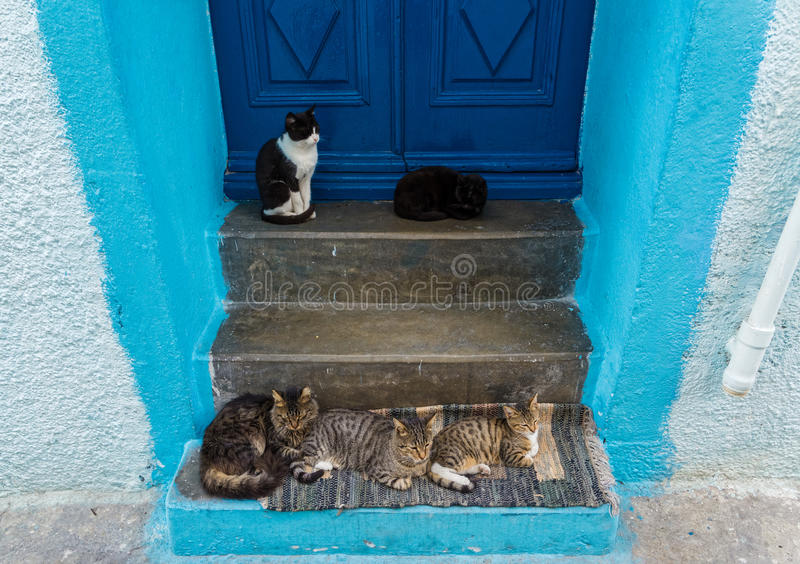 Door in Greece. Door with cats in the traditional village of Mandraki, Nisyros island, Greece royalty free stock photography