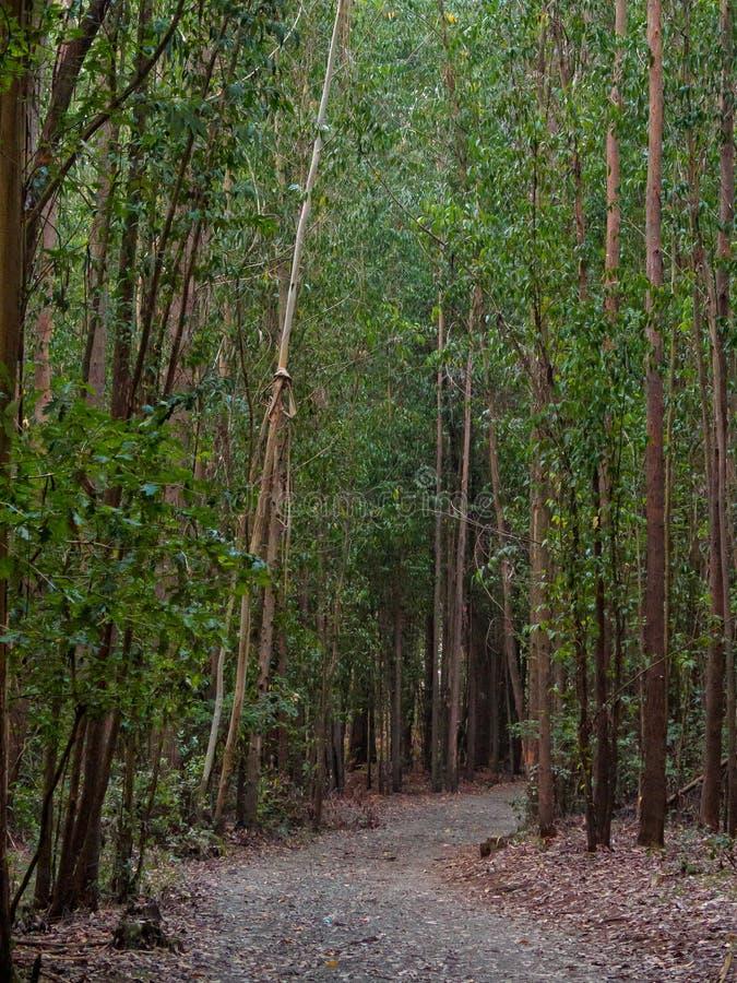 Door het hout - Santa Irene stock foto's