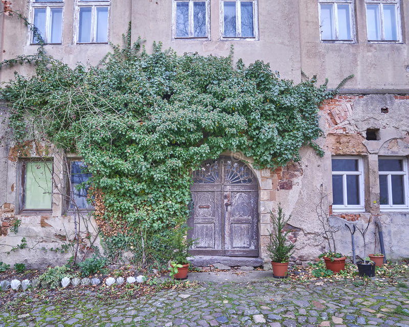 Door and ivy plant in Altenburg, Germany royalty free stock image