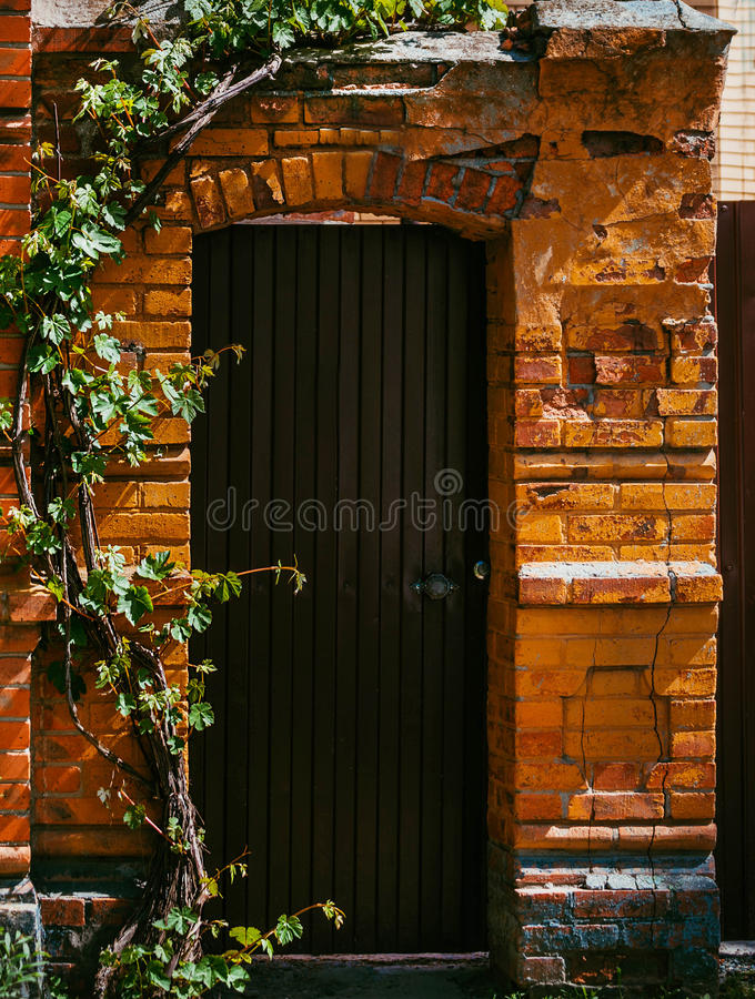 Door in old brick ruined wall. Grunge brick wall with old brown gate twined with vine stock image