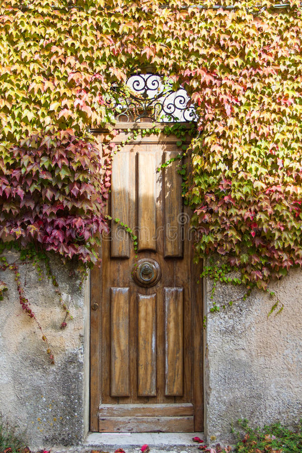 A door overgrown with grape leaves royalty free stock image