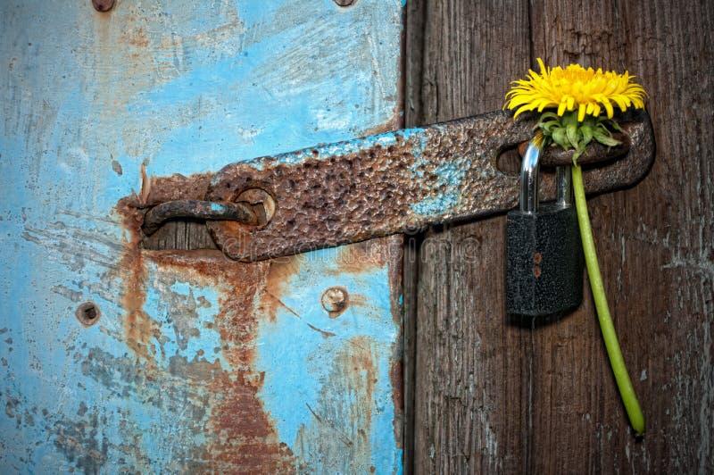 Download Door with a padlock stock image. Image of worn, wallpaper - 27091215
