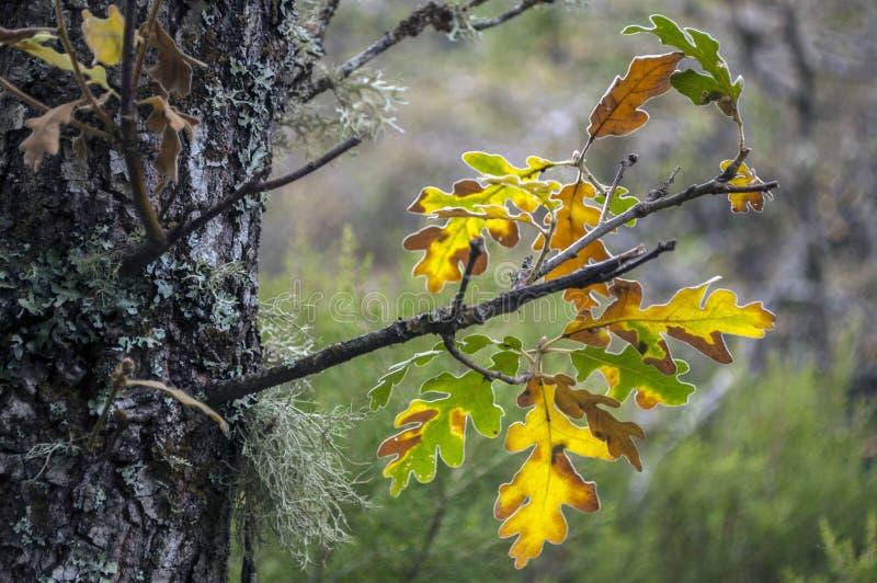 Doorbladert in de herfst stock afbeeldingen