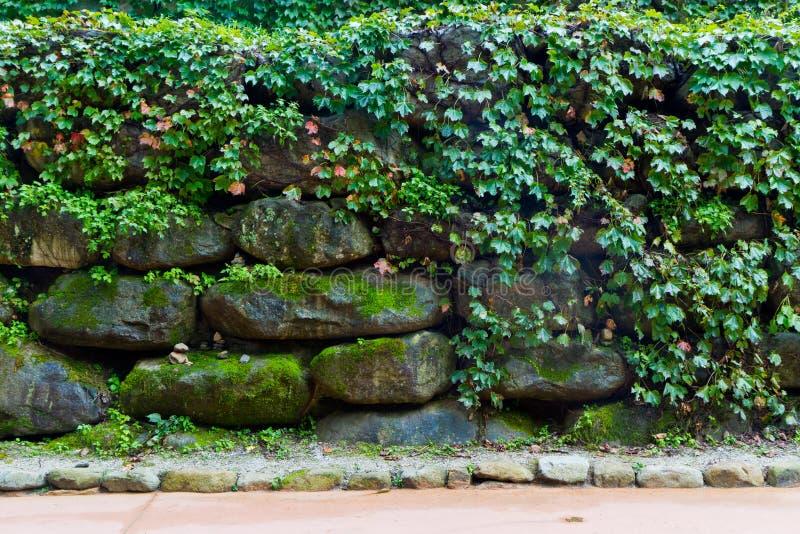 Doorbladert en steenmuur royalty-vrije stock foto