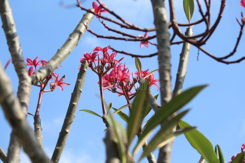 Doorbladert, stamt, bloeit, hemel, rozeachtige kleurenbloemen royalty-vrije stock afbeelding