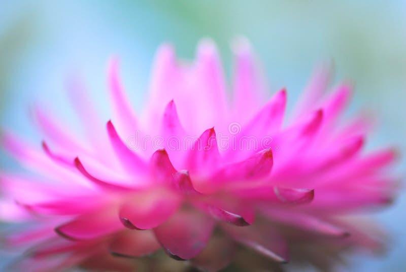 Doorboor bloem royalty-vrije stock afbeelding